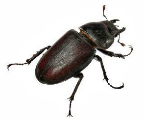 Beetle Exterminator In Akron Ohio